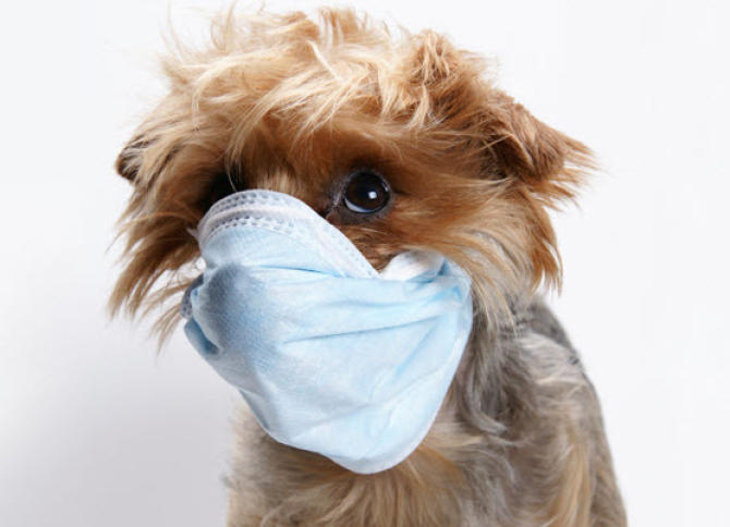 Do Dogs Get Sickness Bugs